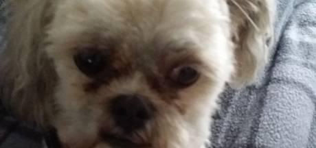 Hondje in Helmond doodgebeten door rottweiler: 'Iedereen was bang voor dat beest'