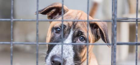 Puppyhandelaar mag woensdag weer open na gedwongen sluiting