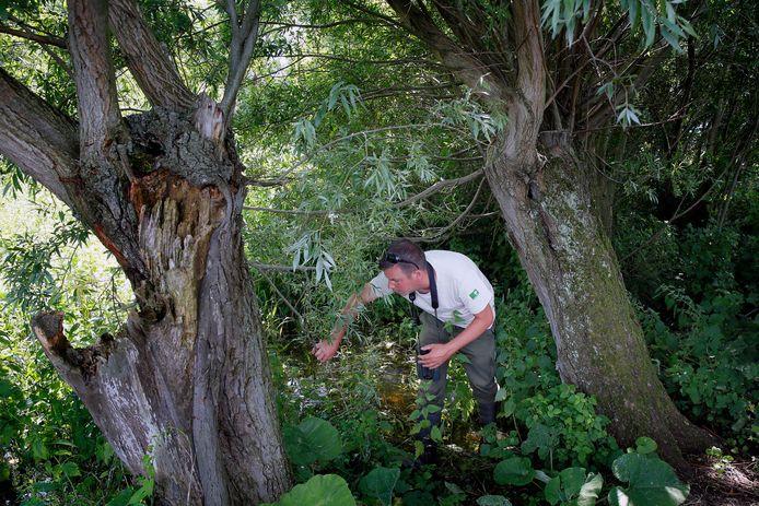 Boswachter Thomas van der Es kijkt of er tussen het dichtbegroeide struikgewas in de Biesbosch nog afval ligt.