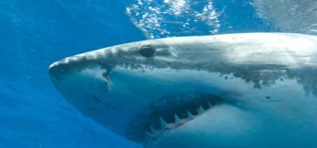 Australische surfer (19) gedood door haai