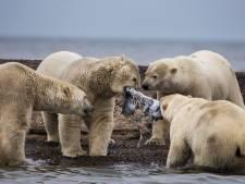 Klimaatcrisis: Alles gaat gewoon door!