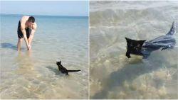 Hij werd achtergelaten in een doos, maar nu is Nathan de zwemmende strandkat een ster