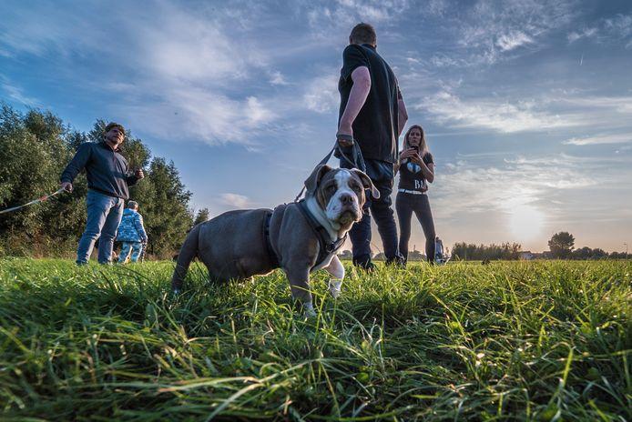 Anja Vrolijk van Dogsbehaviour is druk met puppy-cursussen.