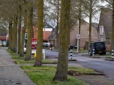 97 'overlast-bomen' in Deurne voorlopig niet gekapt: 'Waarom gezonde bomen van 40 jaar oud omzagen?'