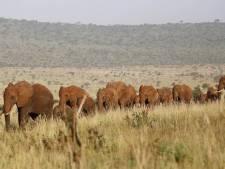 La population d'éléphants diminue dans le principal sanctuaire