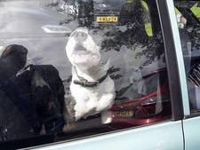 Honden achtergelaten op parkeerplaats Efteling: 'Schandalig dit'