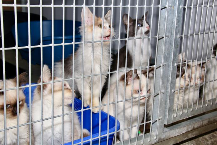 De katten verblijven tijdens hun behandeling tegen de besmettelijke darmziekte giardia in quarantaine.