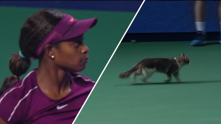 Kat loopt veld op midden in een tenniswedstrijd
