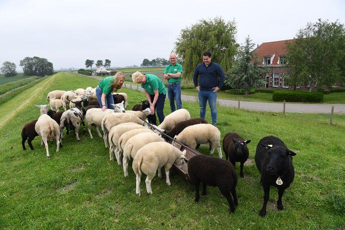 DINTELOORD, Jan Stads / Pix4Profs Van West-Brabantse bodem, Hoeve Karolina, akkerbouw en schapen. Kees, Willeke en dochter Eveline Breure en hun opvolger David Kleiss