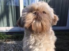 Hond Belle vindt geen bot maar bovengebit, met naam erop