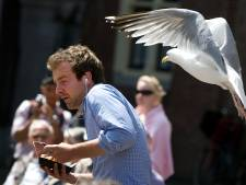 Een snoekduik en weg is je ijsje of worst: meeuwenpaar vliegt elke dag naar Den Haag, vooral vrouwen en kinderen de pineut