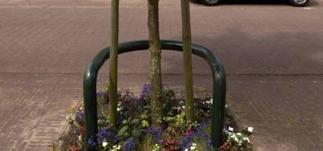 Zelf de buurt frivoler maken? Deze planten passen bij een straatboom