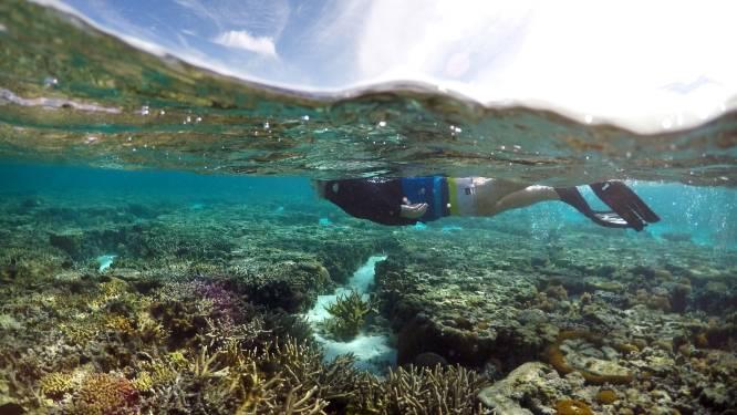 Australië wil geen bedreigde status rif en snorkelt daarom met diplomaten