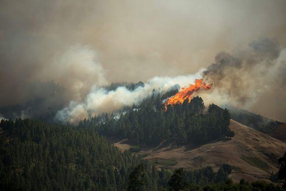 Vlammen van tientallen meters in de bossen bij Montaña Alta.