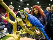 Geen extra maatregelen op Zwolse Vogelmarkt voor viruspreventie: 'We controleren elk jaar streng'