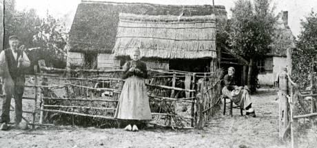 Duinmieren leefden als God in Frankrijk in de duinen van Voorne