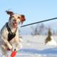 Dít zou iedereen moeten doen die met de hond in de sneeuw heeft gewandeld