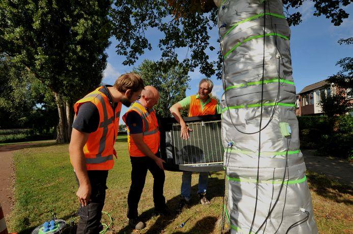 Marc Derksen (rechts) van Treehold legt de werking van de infraroodmatten waarmee een zieke kastanjeboom is ingepakt uit aan boombeheerder Rudy Scheper (midden) van de gemeente Dordrecht en Tom Verstraten (links) van Idverde.