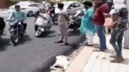 Bouwvakkers aan Taj-Mahal leggen straat aan over hond, die het niet overleeft