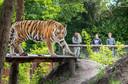 """Het bekijken van 'wilde' dieren in de dierentuin. Kluskens: ,,Tussen dieren in de dierentuin en vaste bezoekers kan een band ontstaan. Daar zouden we graag meer onderzoek naar doen."""""""