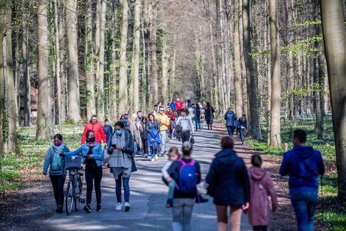 De paarsblauwe boshyacinten lokken tienduizenden toeristen, maar er valt zoveel meer te vertellen over het Hallerbos.