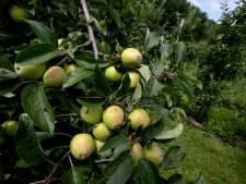 Raad van State kritisch over plan van oud-kweker voor vijf huizen in boomgaard Opijnen