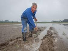 Na drie magere jaren lijken Zeeuwse boeren weer eens wat te verdienen