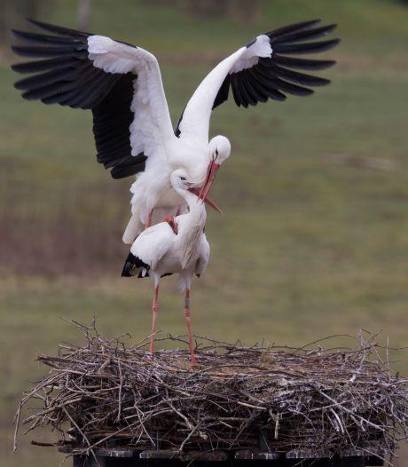 De dieren in Twente en de Achterhoek hebben het voorjaar al in de bol