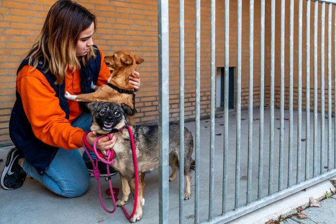 Celine Wilbrink (21) van dierenasiel Utrecht met honden Tara en Nochi, die bang worden van knallen.