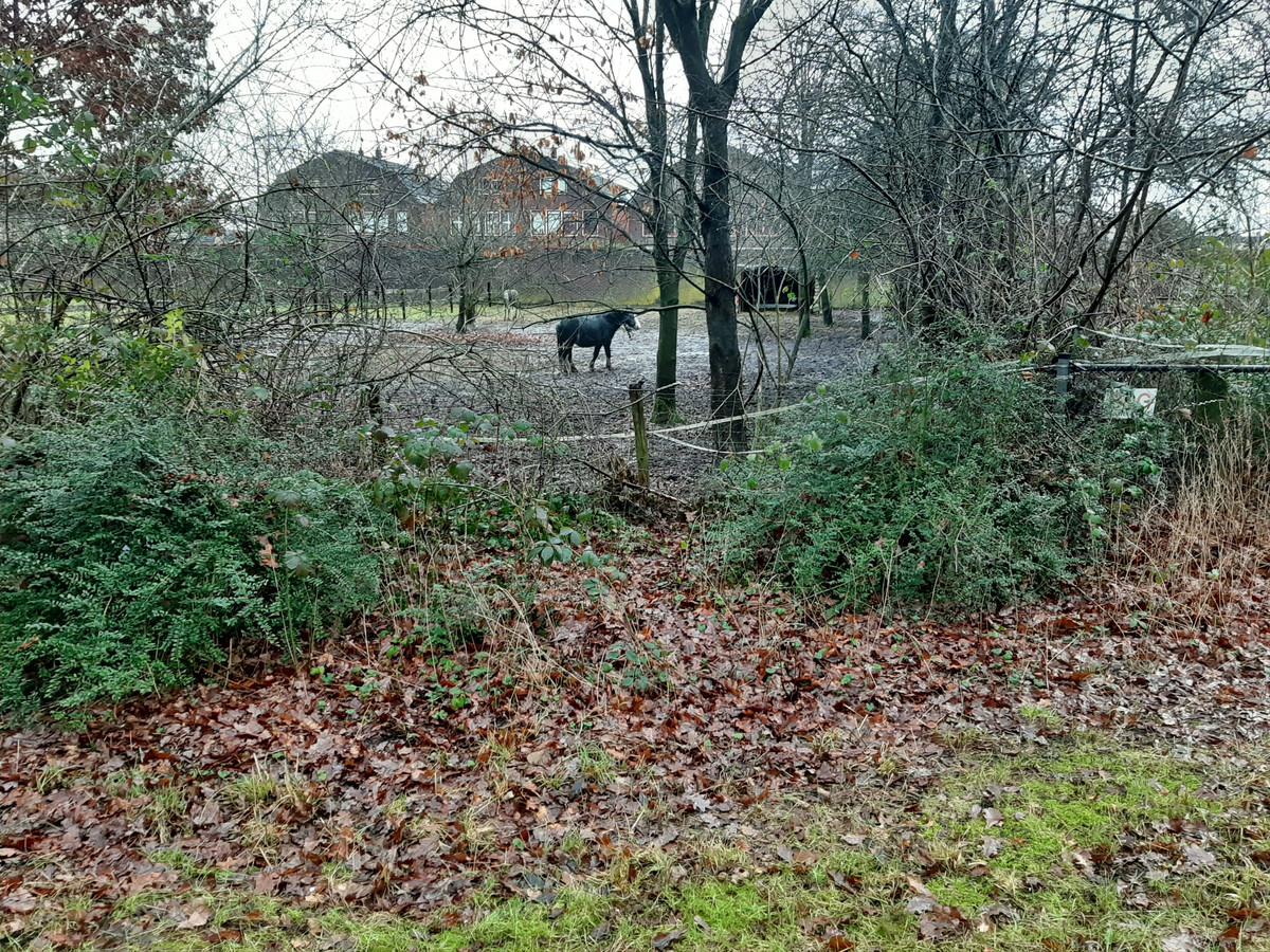 Waarschijnlijk kunnen alleen deze paarden iets gezien hebben aan de Laan van Osseveld in Apeldoorn.