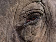 Un éléphant sème la mort en Inde: 16 personnes ont perdu la vie