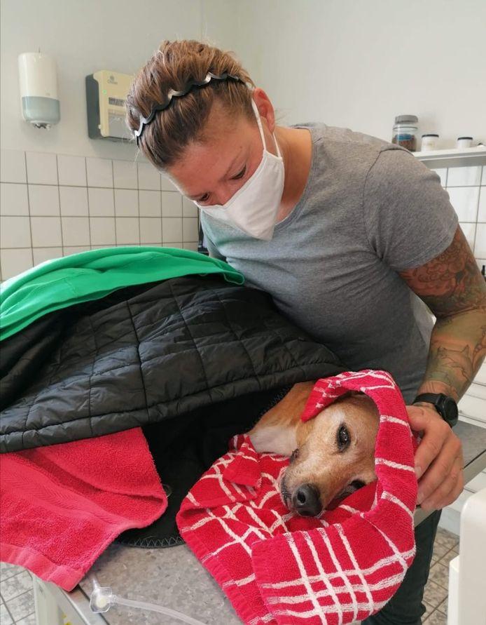 Jennifer Schroder en haar hondje Diego, die doodziek werd na het eten van giftige paddenstoelen.