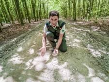 Slechte paden Balijbos worden opgeknapt