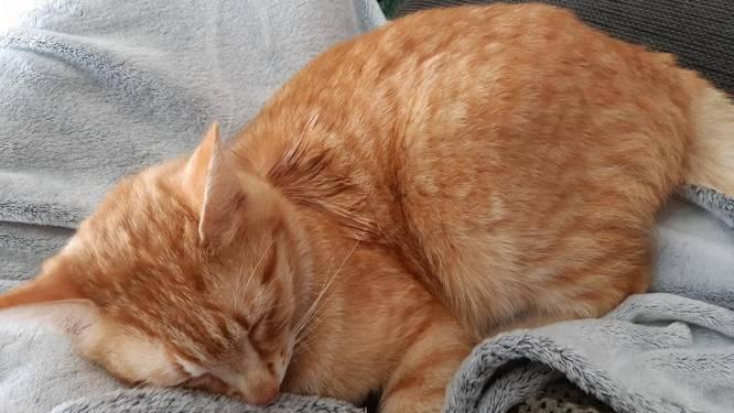 Kat vermoedelijk beschoten met luchtgeweer, buurtbewoners zoeken dader en loven beloning uit