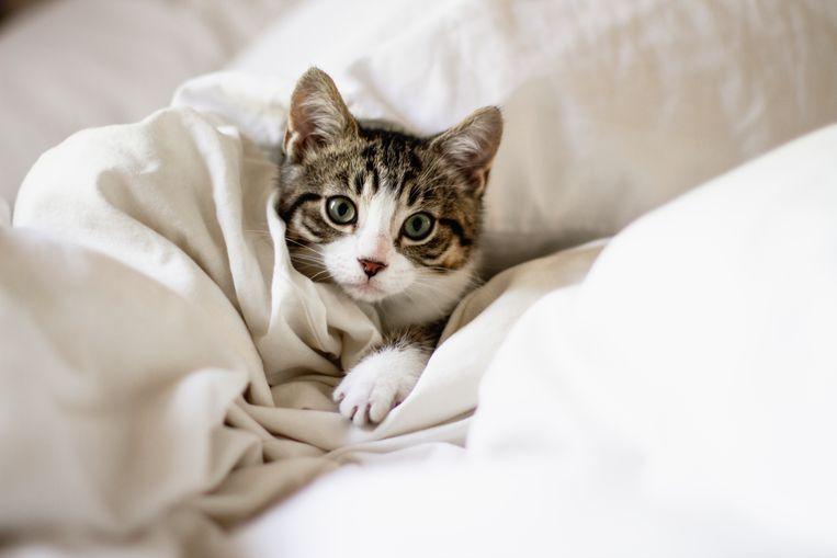 Kat na vijf jaar vermissing teruggevonden: