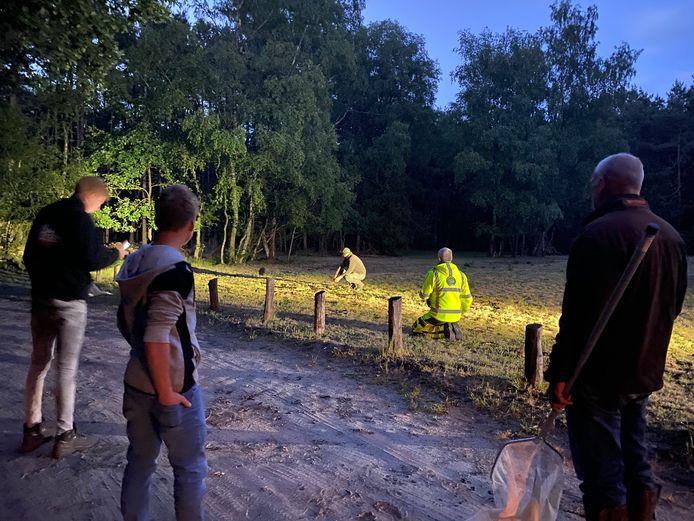 Een groep wilde baby zwijnen hield zondagavond de boswachter en de dierenambulance enige tijd bezig op de Heetweg in Kootwijk