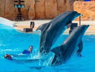 Parc Astérix sluit dolfinarium en euthanaseert oudste dolfijn Femke (39)