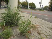 'Oplossing' gebrekkig onderhoud openbare ruimte: Almeloër moet zelf onkruid uit trottoir krabben