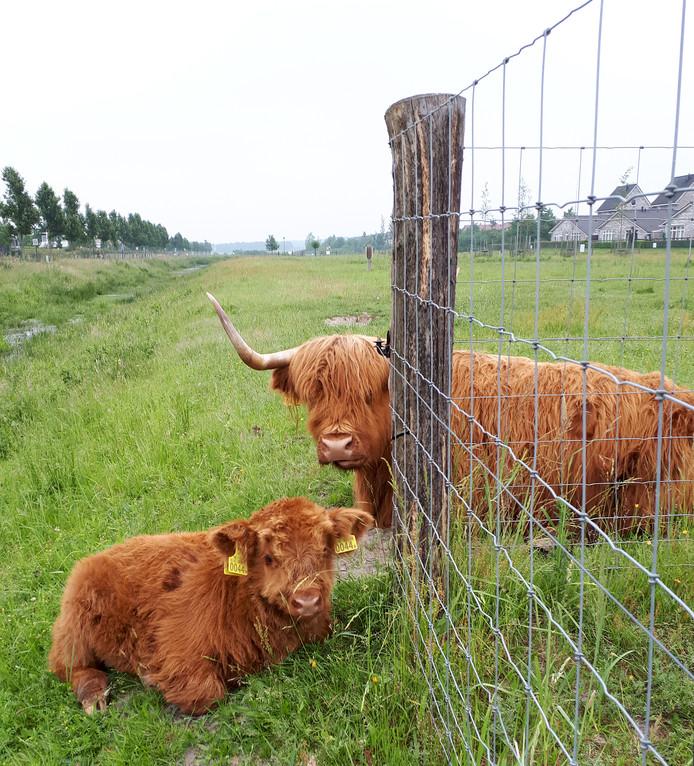 De familie, tante en nicht, liggen in de buurt op de Roosendaalse Landerije.