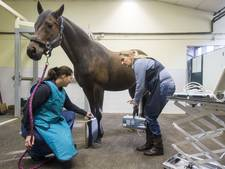 Dierenkliniek en -hotel Hazewinkel sluit de deuren in Oldenzaal