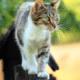 Bizar maar het mag: zwerfkatten mogen in Nederland worden afgeschoten