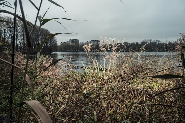 De plek aan de rand van de Sloterplas waar Krysztof Malinowski werd gevonden.  Beeld Jakob Van Vliet