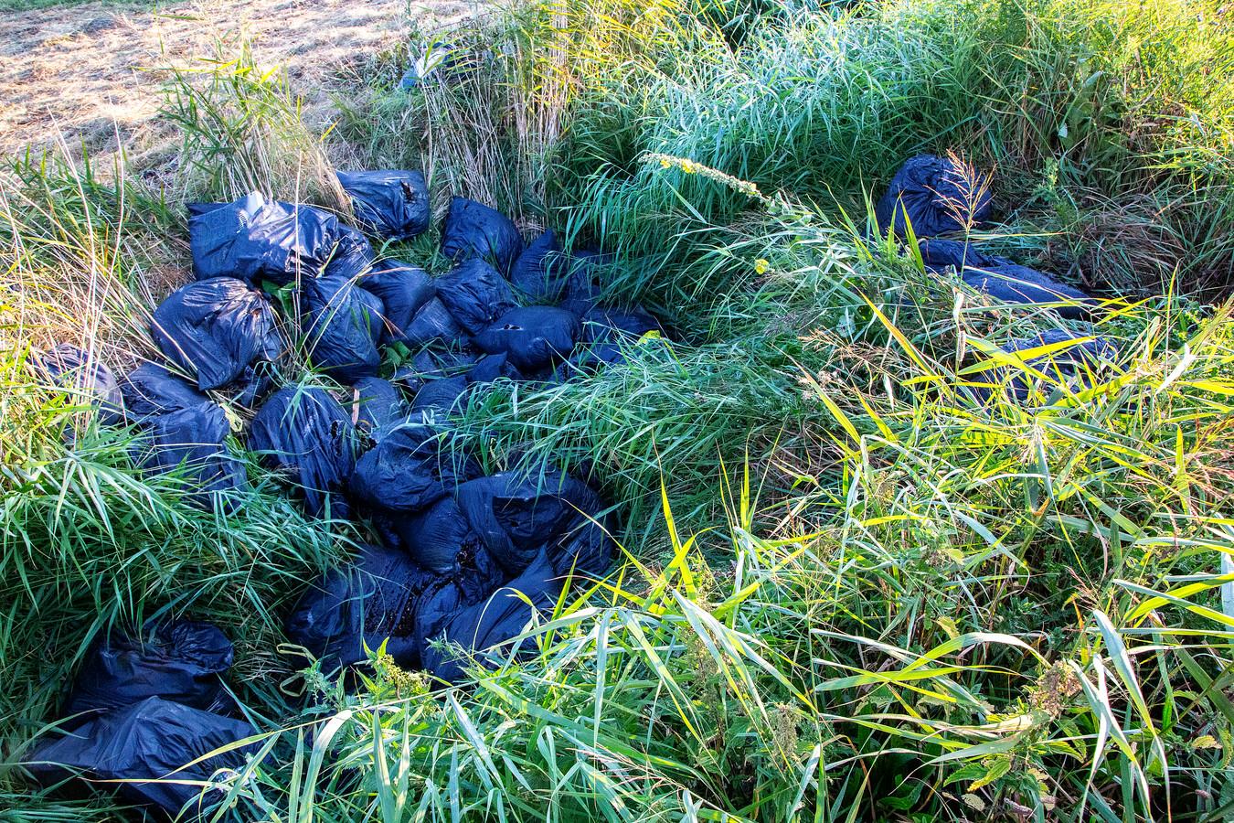 In de berm werden tientallen zakken hennepafval gevonden.