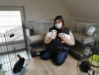 """Corona zorgt nu ook voor… overvol konijnenasiel: """"Dieren mogen geen impulsaankoop zijn tijdens een vervelende lockdown"""""""