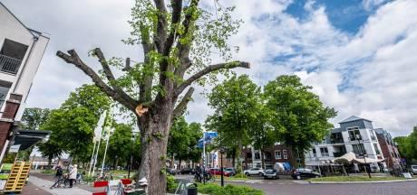 Snoeibeurt moet monumentale lindeboom redden