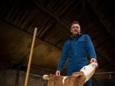 Boer Albert uit Oene blikt twintig jaar na MKZ-crisis terug: 'De stal als hospice, onze koeien zaten in de wachtkamer van de dood'