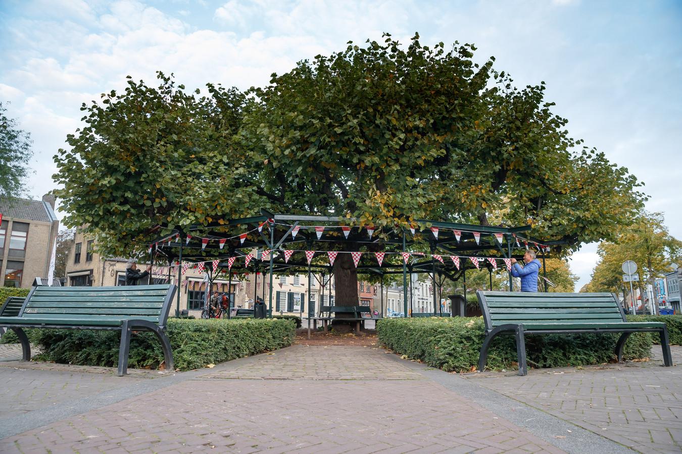 De Moeierboom is verkozen tot de Nederlandse Boom van het Jaar. Wordt daarom in de slingers gezet.