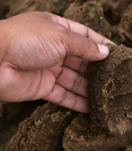 Colsen uit Hulst wint prijs voor techniek om stikstof uit mest te halen
