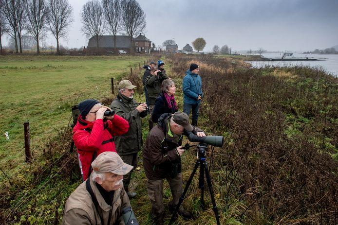 Vogelspotters in de uiterwaarden bij Opheusden.