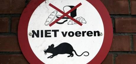 Zorgen om ratten in Papendrecht